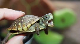 Newborn Turtles Desktop Wallpaper For PC