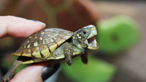 Newborn Turtles wallpapers high quality