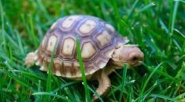 Newborn Turtles High Quality Wallpaper