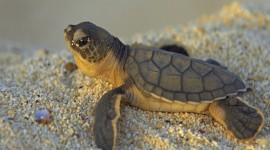 Newborn Turtles Wallpaper