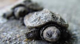 Newborn Turtles Wallpaper Download