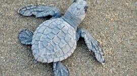 Newborn Turtles Wallpaper For Desktop