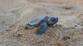 Newborn Turtles Wallpaper For PC