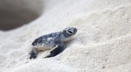 Newborn Turtles Wallpaper Free