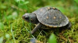 Newborn Turtles Wallpaper Full HD