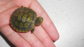 Newborn Turtles Wallpaper Gallery