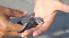 Newborn Turtles Wallpaper HD