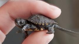 Newborn Turtles Wallpaper HQ