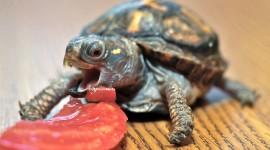 Newborn Turtles Wallpaper High Definition