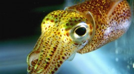 Squid Wallpaper Download Free