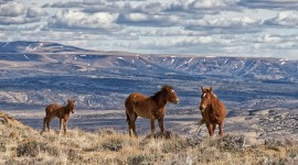 Wyoming Wallpaper Download Free