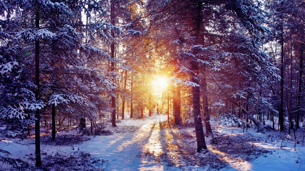 4K Winter Forest wallpapers HD
