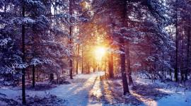 4K Winter Forest Best Wallpaper