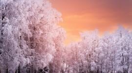 4K Winter Forest Desktop Wallpaper