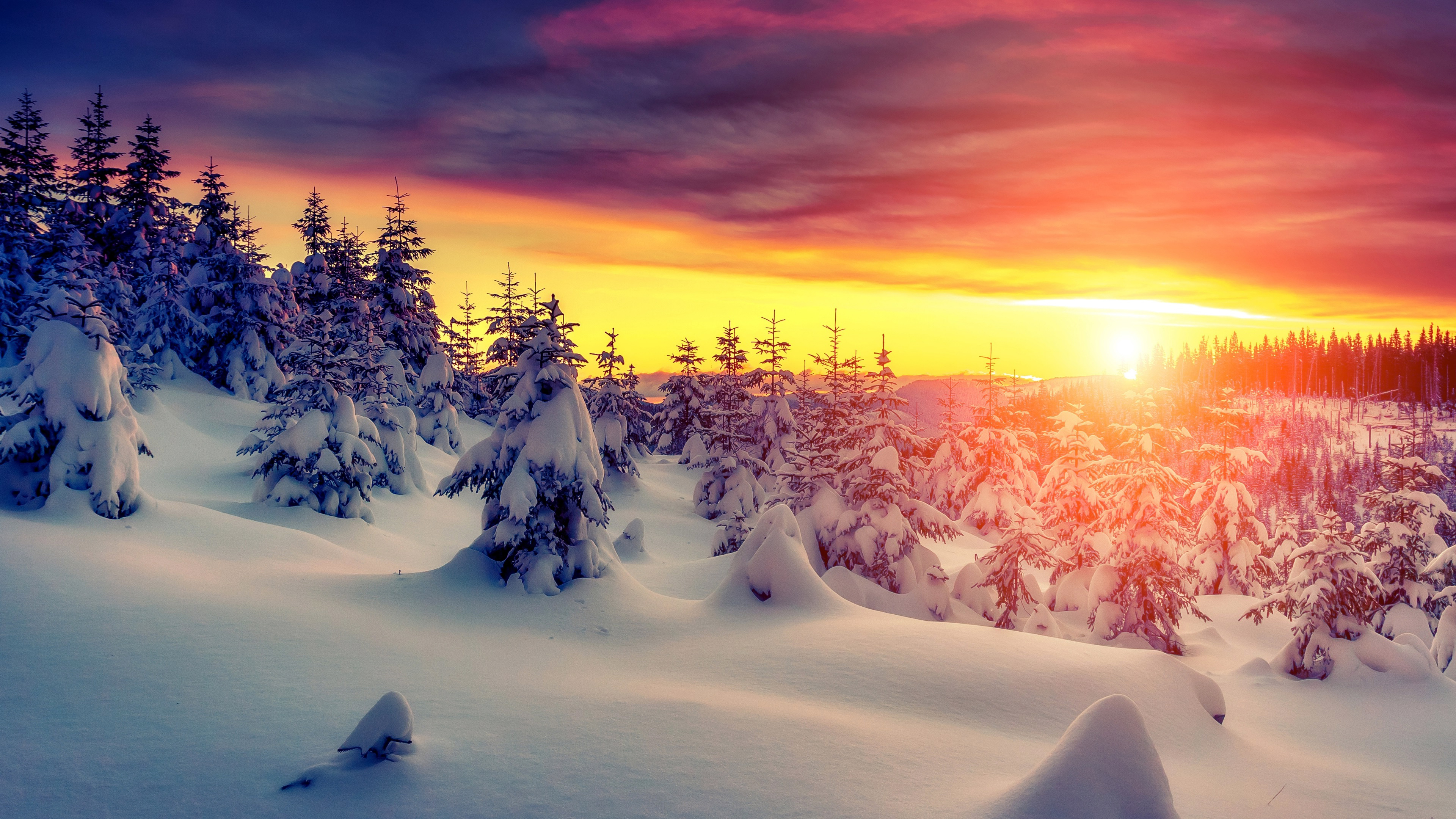 4K Winter Forest Wallpapers High Quality   Download Free