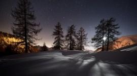 4K Winter Forest Image Download