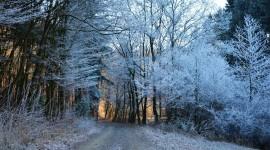4K Winter Forest Photo