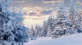 4K Winter Forest Photo Free