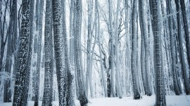 4K Winter Forest Photo Free#1
