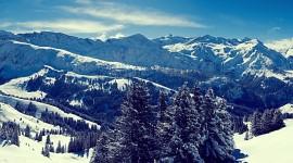 4K Winter Forest Photo#1