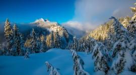 4K Winter Forest Wallpaper