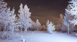 4K Winter Forest Wallpaper Download