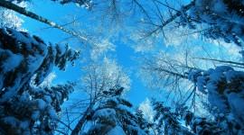 4K Winter Forest Wallpaper For Desktop