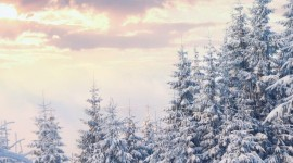 4K Winter Forest Wallpaper For IPhone