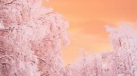 4K Winter Forest Wallpaper For Mobile