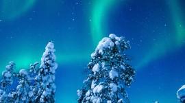 4K Winter Forest Wallpaper For Mobile#1