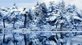 4K Winter Forest Wallpaper Free
