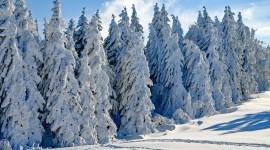 4K Winter Forest Wallpaper Gallery