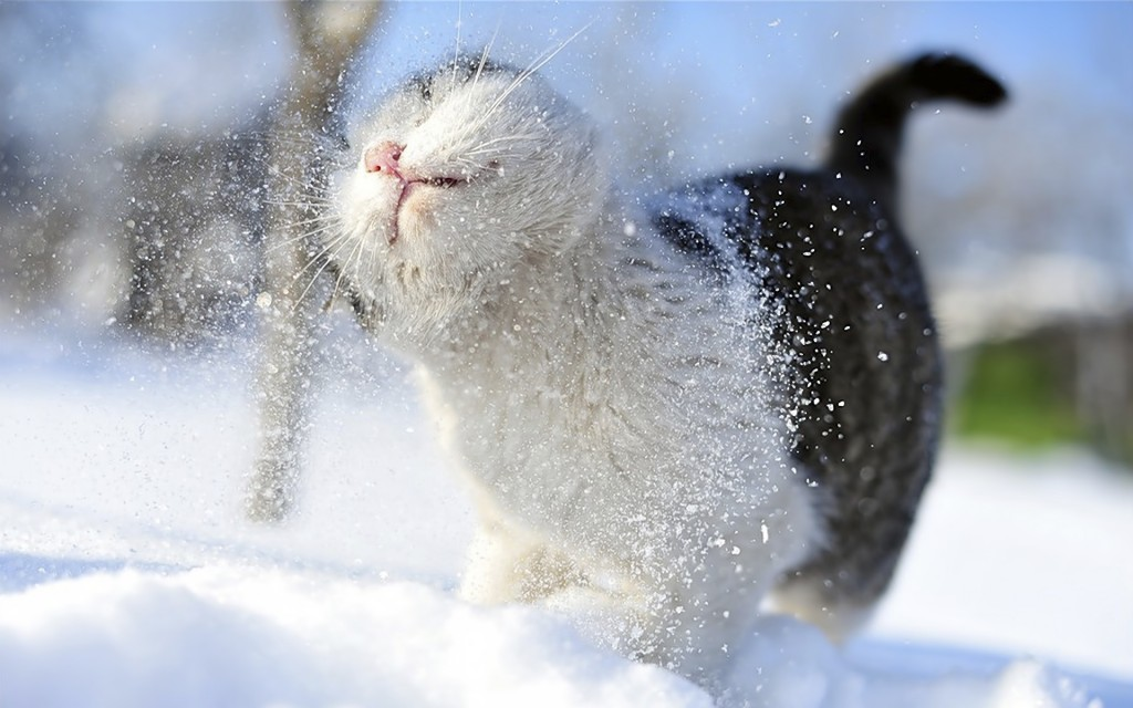 Animals In The Snow wallpapers HD