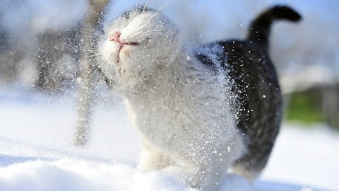 Animals In The Snow wallpapers high quality