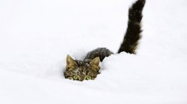 Animals In The Snow Photo