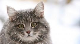 Animals In The Snow Photo Download