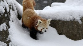 Animals In The Snow Photo Free