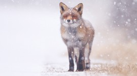 Animals In The Snow Wallpaper 1080p