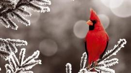 Birds In The Snow Best Wallpaper