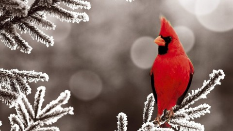 Birds In The Snow wallpapers high quality