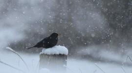 Birds In The Snow Desktop Wallpaper