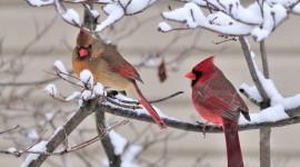 Birds In The Snow Desktop Wallpaper HD