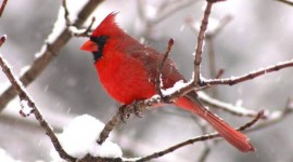 Birds In The Snow Image