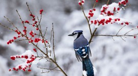Birds In The Snow Wallpaper For PC