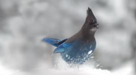 Birds In The Snow Wallpaper Full HD