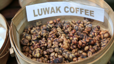 Coffee Luvak wallpapers high quality