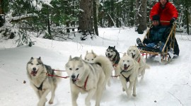Dog Sledding Desktop Wallpaper