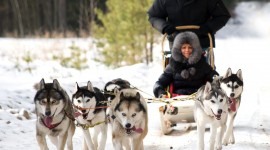 Dog Sledding Desktop Wallpaper For PC