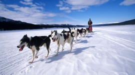 Dog Sledding Desktop Wallpaper HD