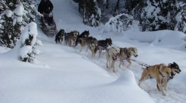 Dog Sledding Photo Download#1